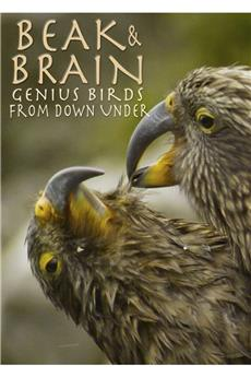Beak & Brain (2013) 1080p download